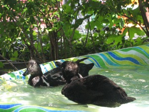 swimming is a great way to cool down when things get hot